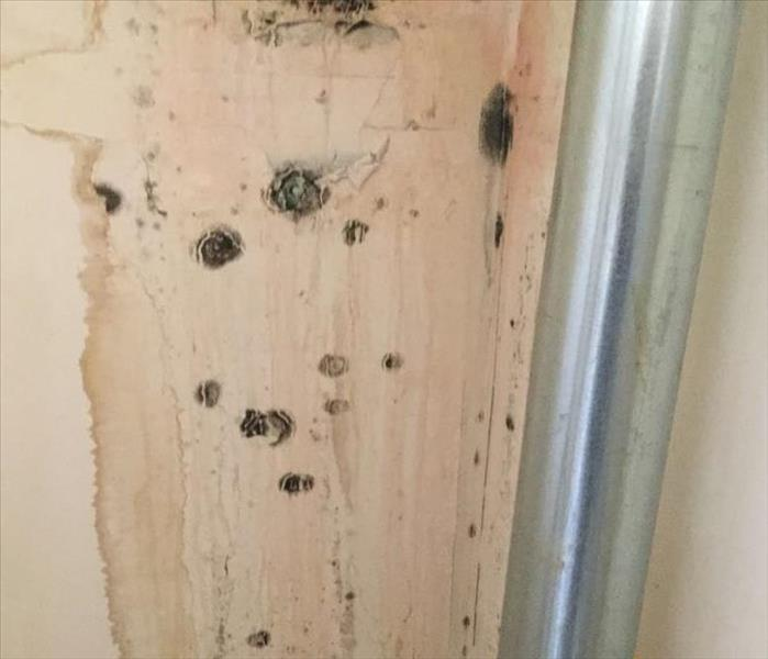 Water Leads to Mold Growth