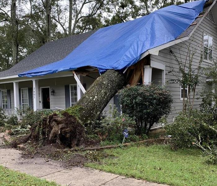 A tree fallen onto a house with a blue tarp