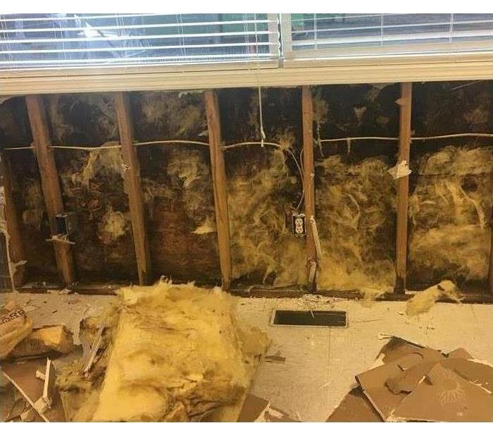 Mold Remediation 4 Signs of Mold
